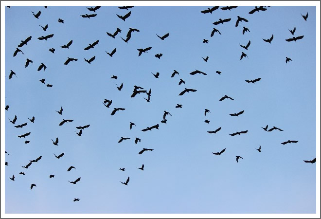 鳥インフルエンザの2つの病原性と感染拡大ロジック